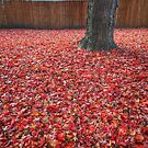 Fallen Leaves - Red by Robert Baker