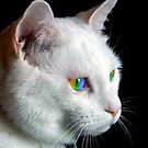 Pride Cat's Eyes by technoqueer