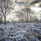 Midwest Winter by Robert Baker