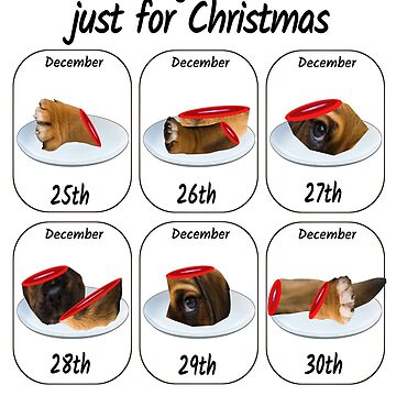 A dog is not just for Christmas  by loganferret