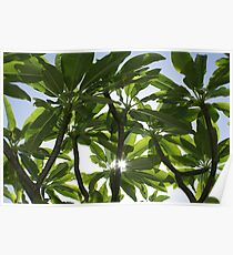 Tropical Canopy Poster