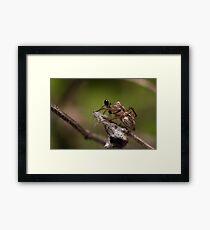 Lynx Spider and prey Framed Print
