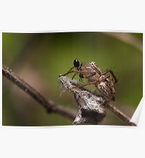Lynx Spider and prey Poster
