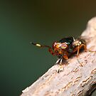 Crazy Eyed Fly by Andrew Durick