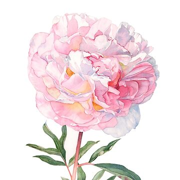 Peony by Louisedemasi
