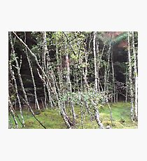 Forest near Loch Ness Photographic Print