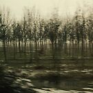 Talking to trees #7 - Rows by VperVioletta