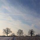 Essex Winter Fields #2 by J J  Everson