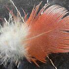 Galah feather by indiafrank