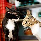 Katzen - Secret  von laura-S