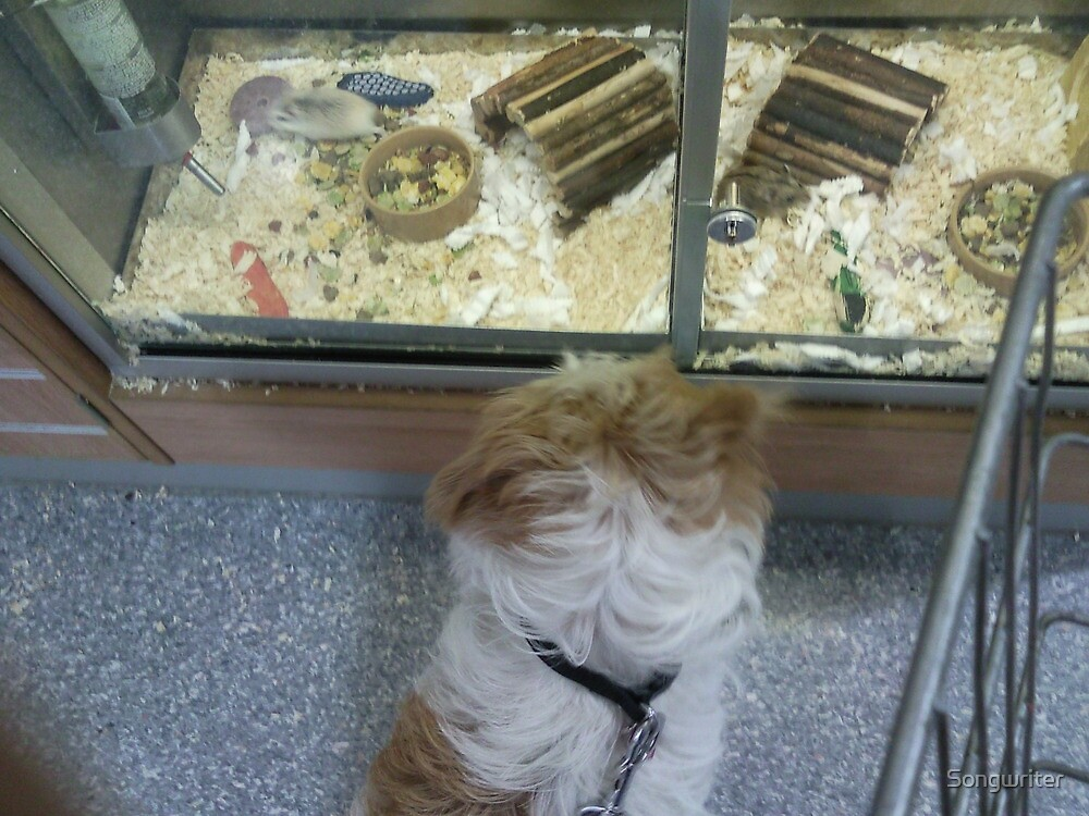 Skye at the Pet Shop, making friends? by Songwriter