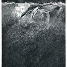 Humpbacks - night ocean by Susana Weber
