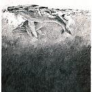 Humpbacks - surfacing by Susana Weber