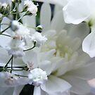 Winter White by lissygrace