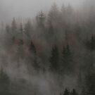 Mystic Wood by Patrice Mestari