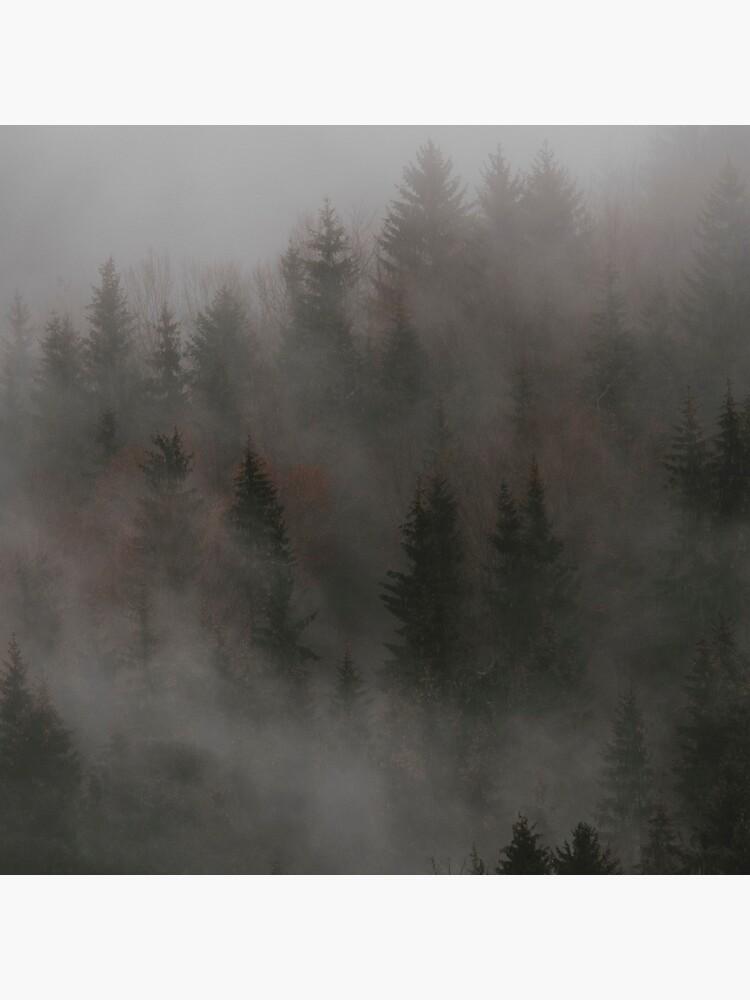 «Mystic Wood» par patricemestari