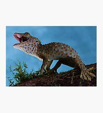 Defensive Tokay gecko Photographic Print
