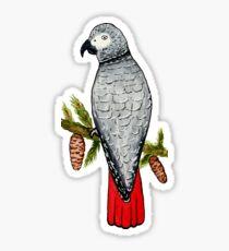 African Grey on a Fir Tree Branch Sticker