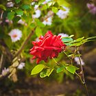 198 - Dieser Garten von CarlaSophia