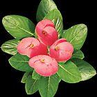 Pink Flower leaves (Design 1) by hutofdesigns