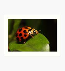 Lady beetle on a leaf Art Print