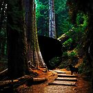 Newfies in the Redwoods by Christine Mullis