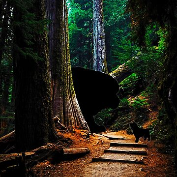 Newfies in the Redwoods by itsmechris