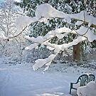 IS IT WINTER YET? by Elaine Bawden