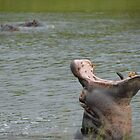 Hippo In The Water Mouth Wide Open by vrphotographysa