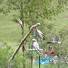 wild birds by gillyisme53