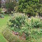 Garden by Julie Sherlock