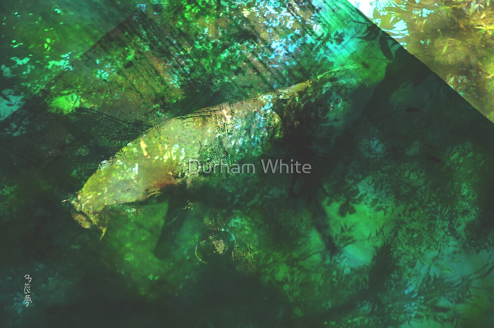 rainforest waters by Durham White