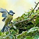 Blue Tit by Stephen Knowles