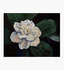 Gardenia Oil Painting Photographic Print