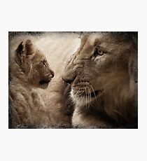 Close-up of a male lion and its cub Photographic Print