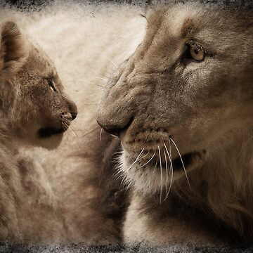 Close-up of a male lion and its cub by franceslewis