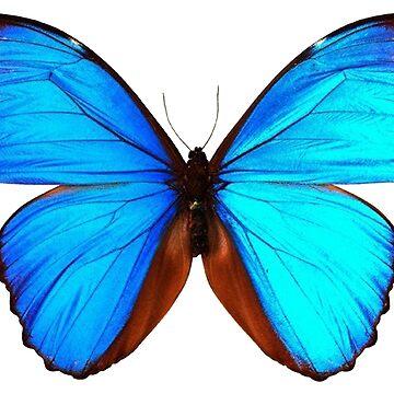 Blue Butterfly by MAMMAJAMMA