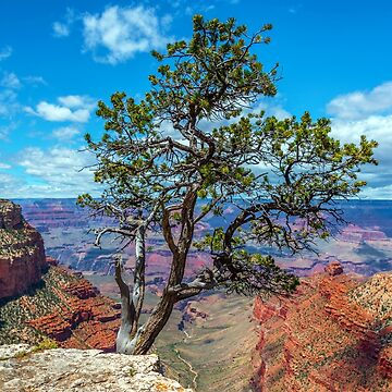 Bright Angel Trail by JohnDSmith