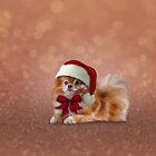 Dog Pomeranian Spitz in red hat of Santa Claus by bonidog