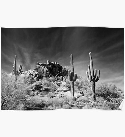 Tres Saguaro Poster