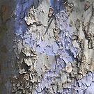 Blue Bark by Lynn Wiles