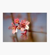Upton Colours Photographic Print