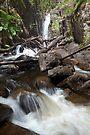 Little River Falls by Travis Easton