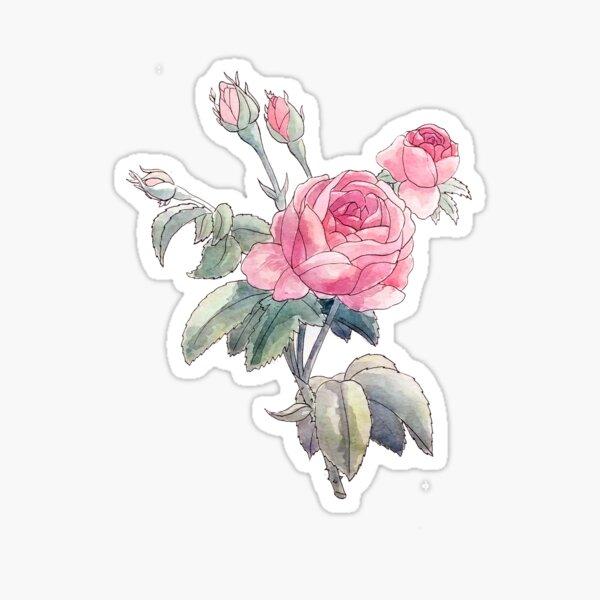 A Vintage Rose Illustration Sticker