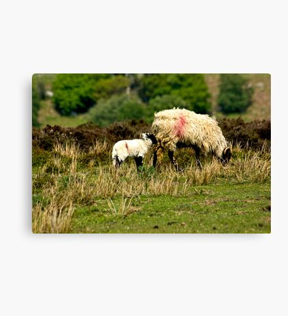 On the Moors Canvas Print