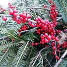 Holiday Holly Berries  by jazzsart