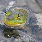 Ribbit!! by Tracy Wazny