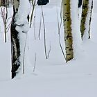 Winter Abstract by Barbara  Brown