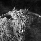 Highlander - Scottish highland cow by Martina Cross