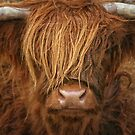 Highlander - Scottish Highland cow oil painting by Martina Cross